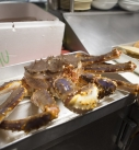 Fresh Crab ready to cook